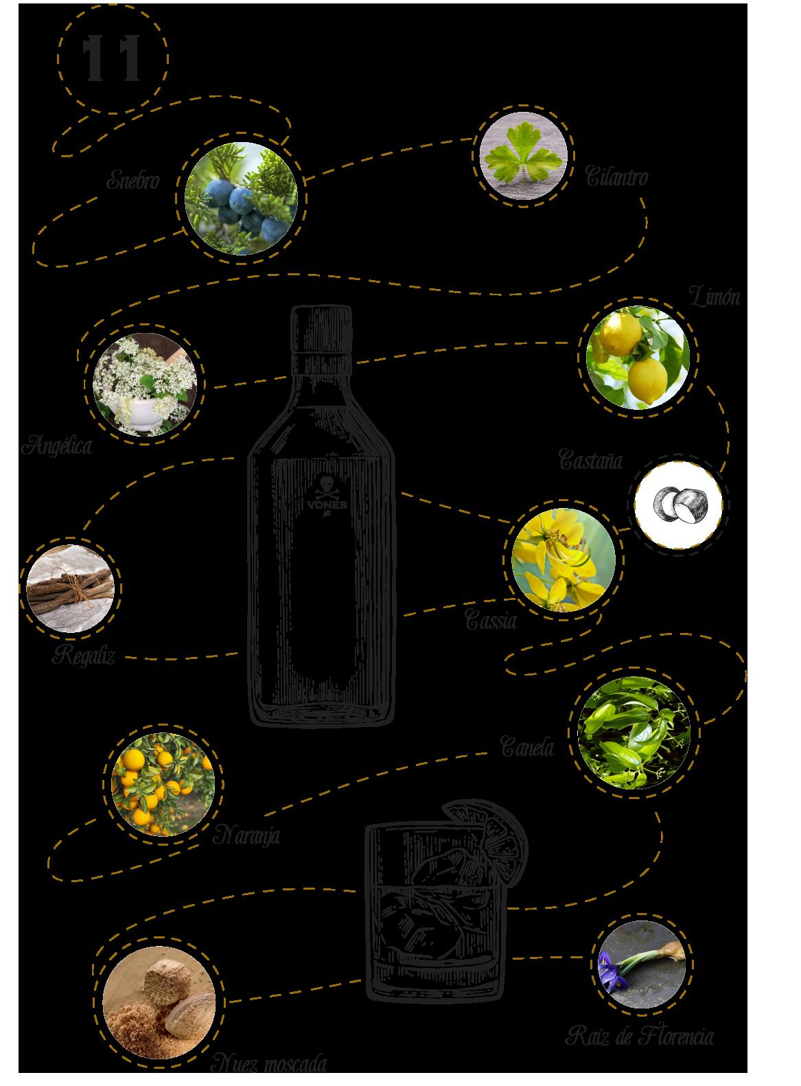 Infografía Botánicos